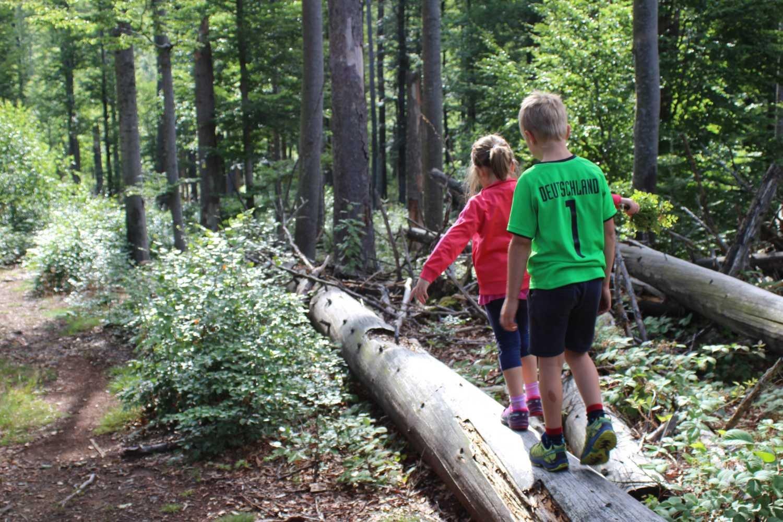 Flusskrebs Sagwasser Wanderung Baumstamm balancieren