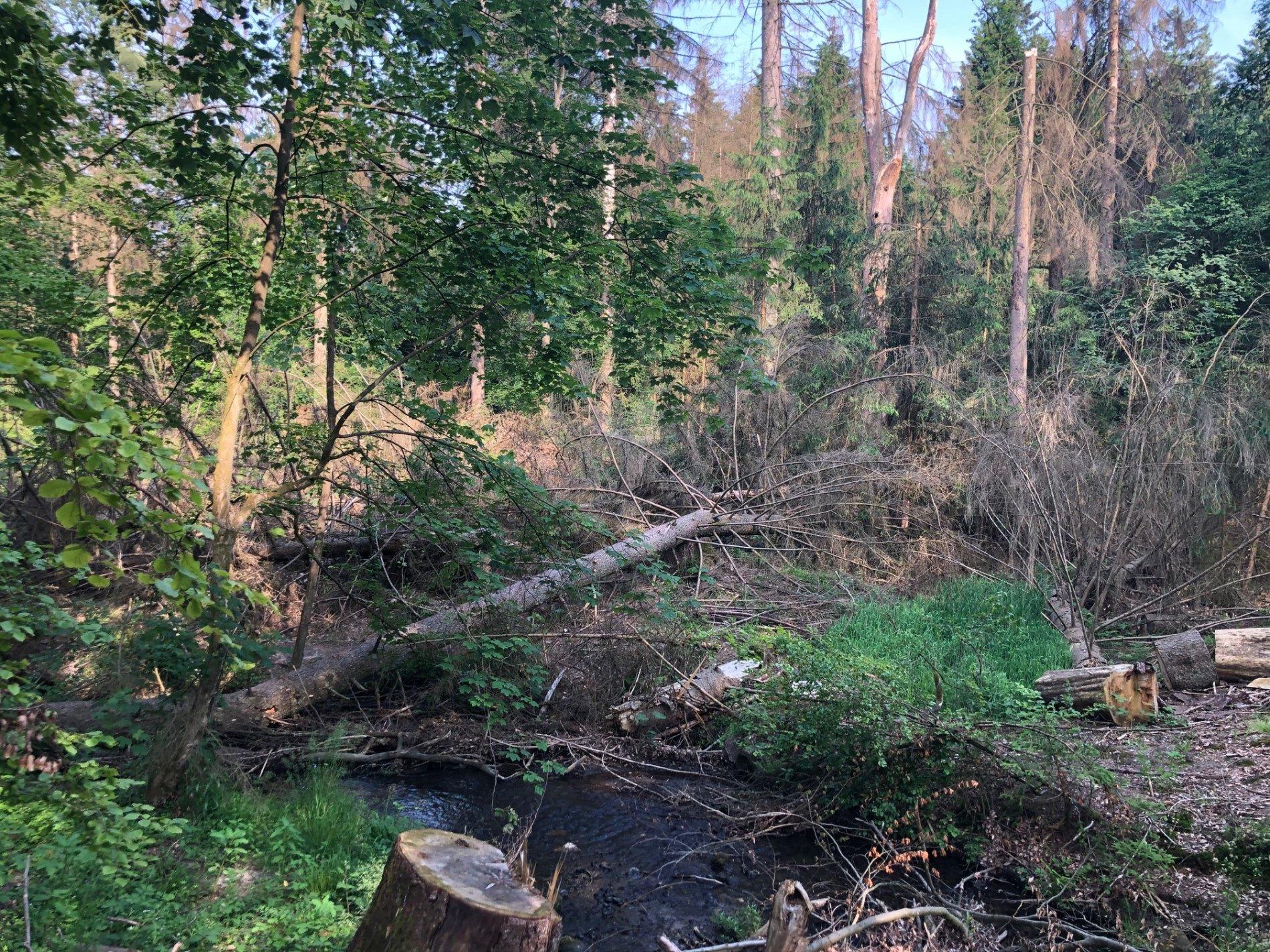 Eine Wegstrecken sind wegen Waldschäden aktuell gesperrt
