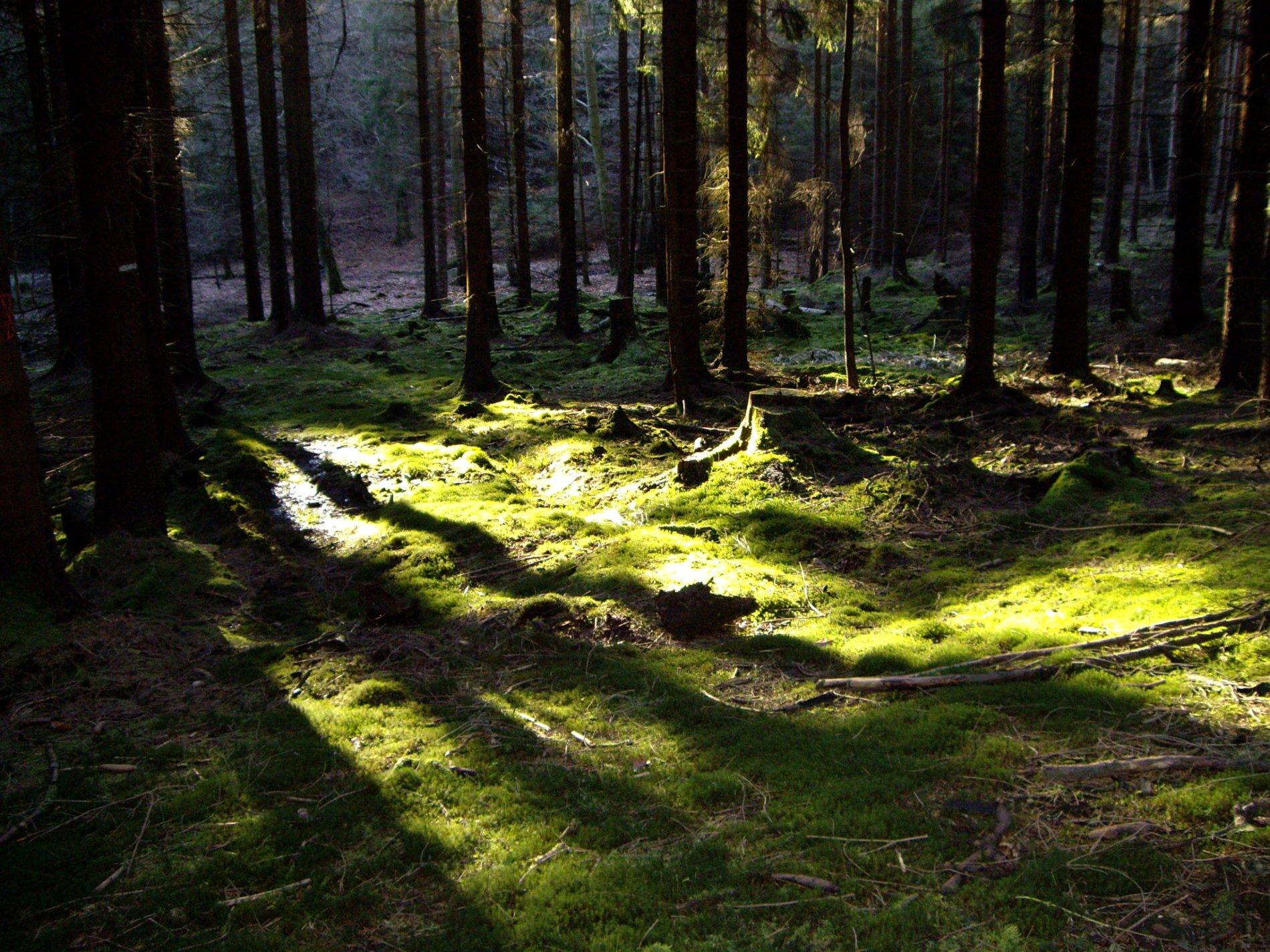 Wald in der Nähe des Möhnesees