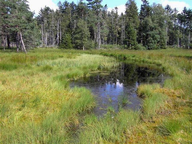 Das Hochmoor Wilde Aue in der Gemeinde Sonnen im Wegscheider Land