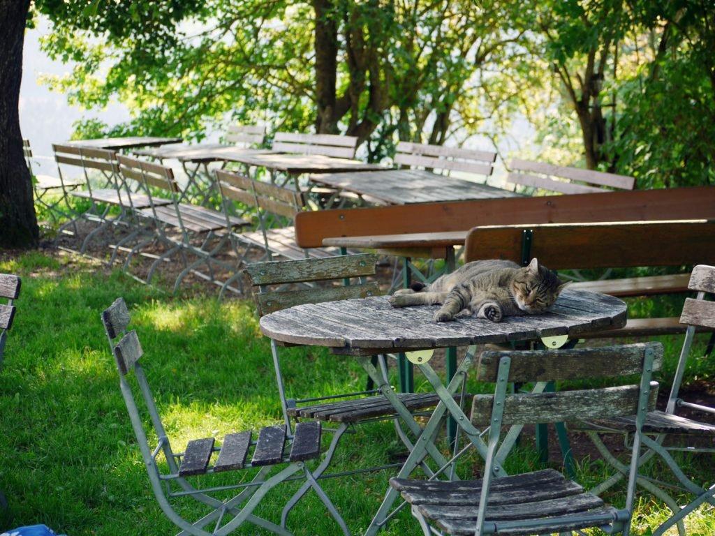 In einem Garten stehen im Schatten von Bäumen mehrere Tische und Stühle. Auf dem vordersten Tisch liegt eine schlafende Katze.