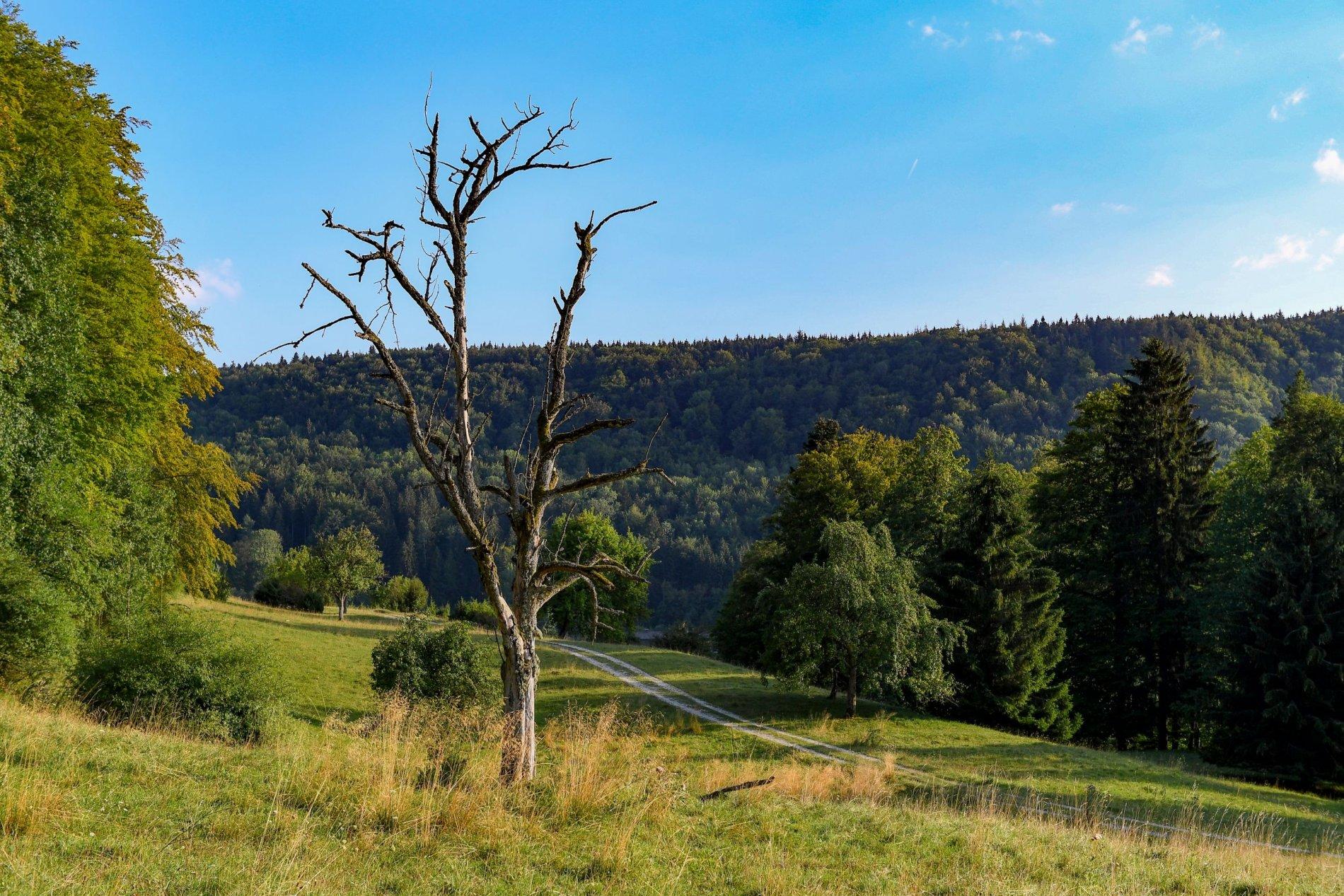 Naturschutzgebiet Roschbach - so schön, so ruhig!