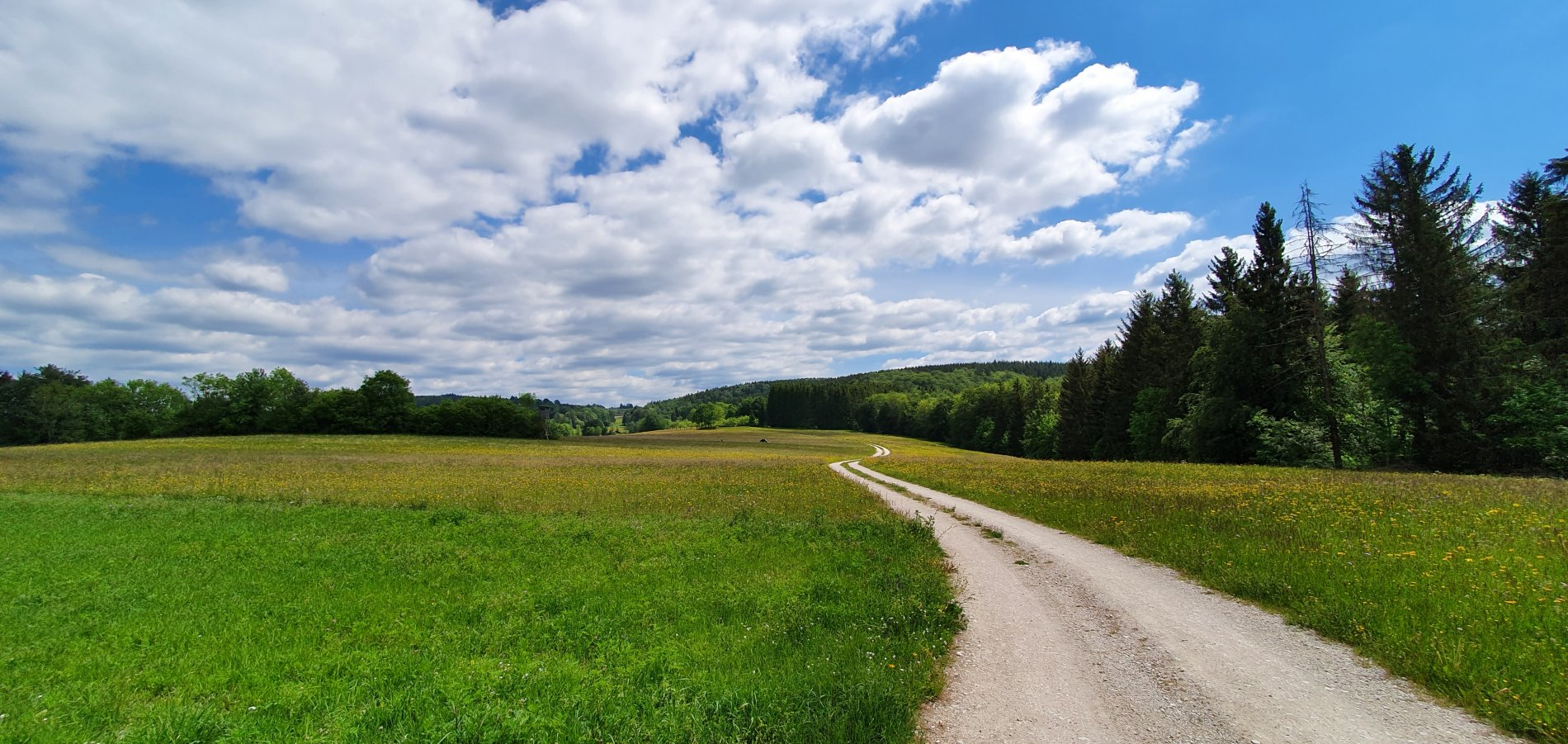 Wanderweg durch grüne Wiesen