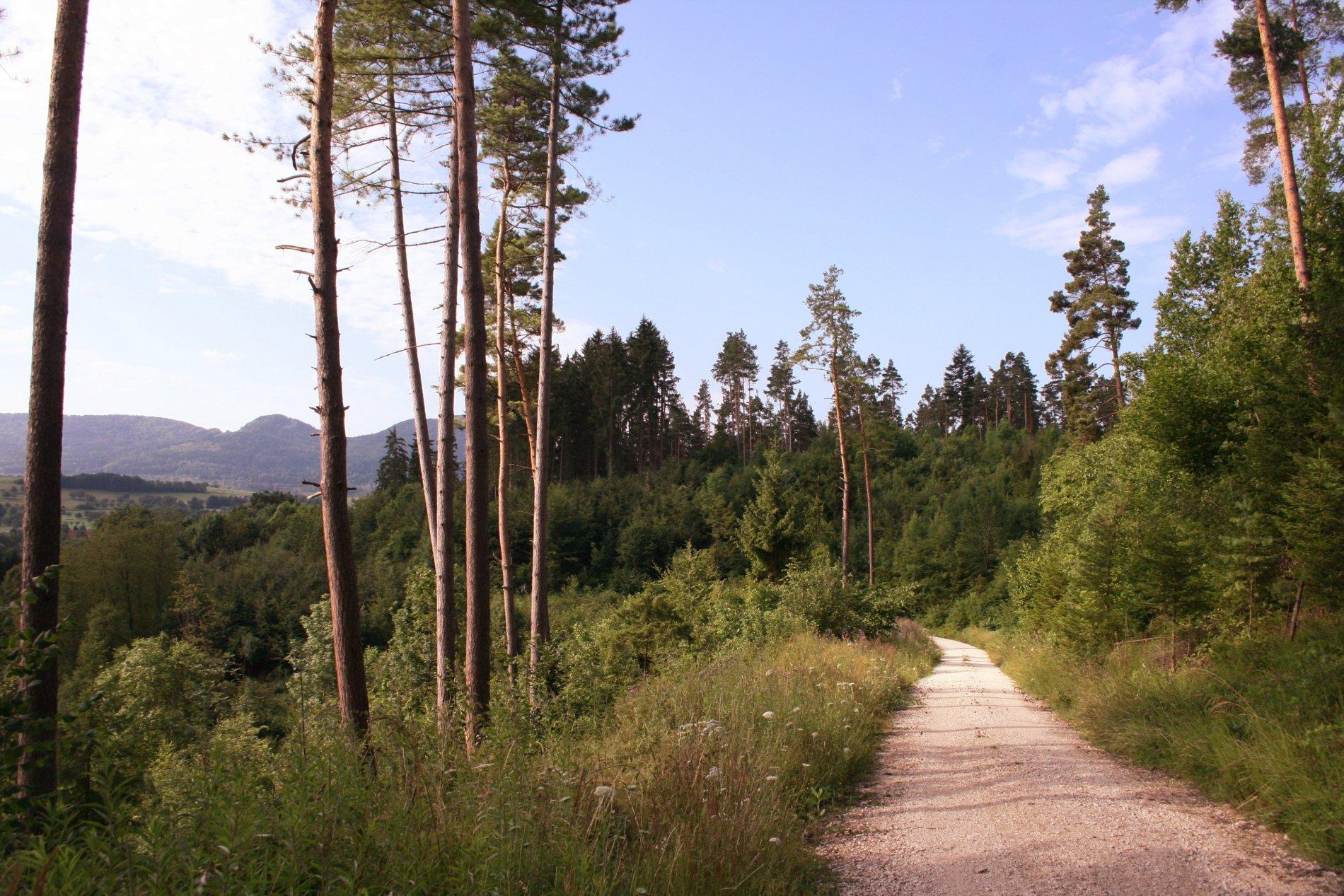 Schotterweg durch den Wald mit Blick auf die Balinger Berge