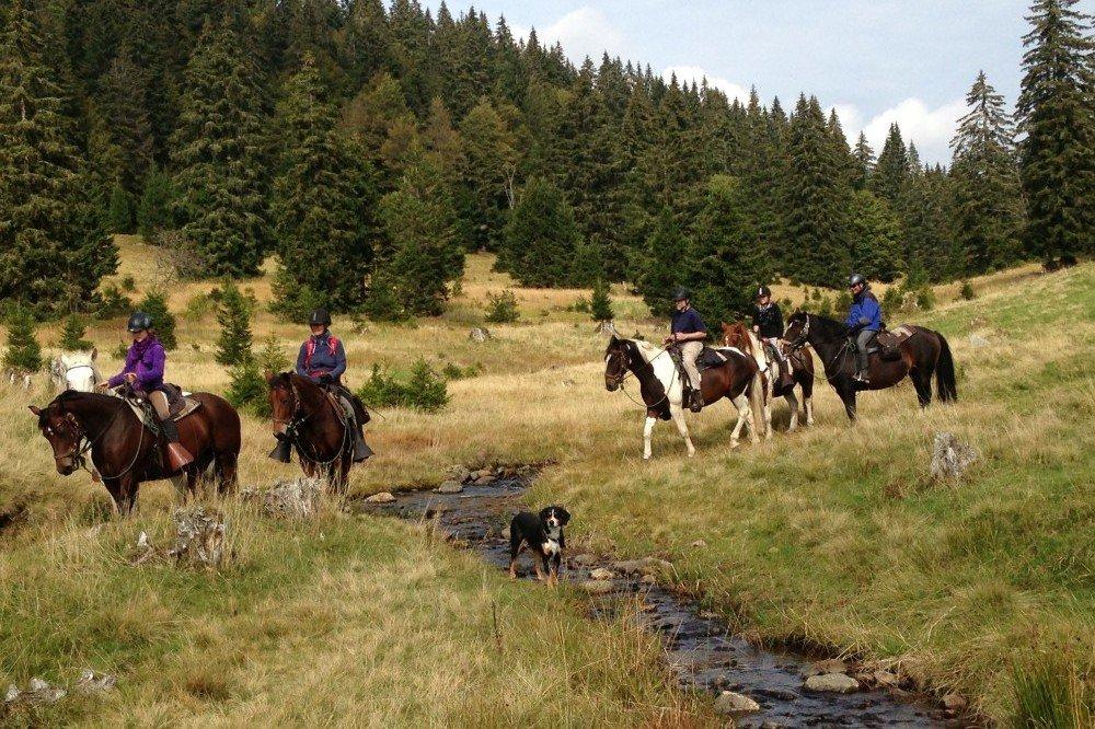 Wanderreiten im Schwarzwald - ein einzigartiges Ferien-Erlebnis