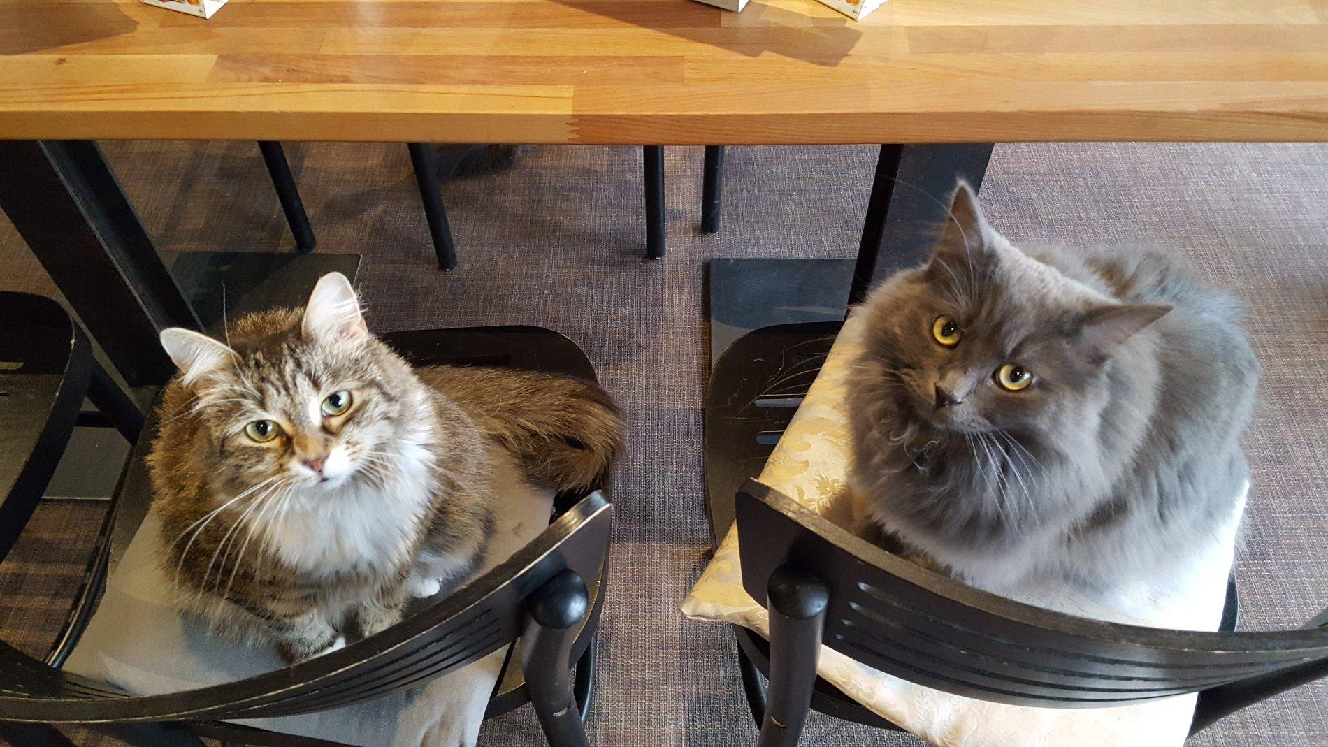 Katzen im Cats Café