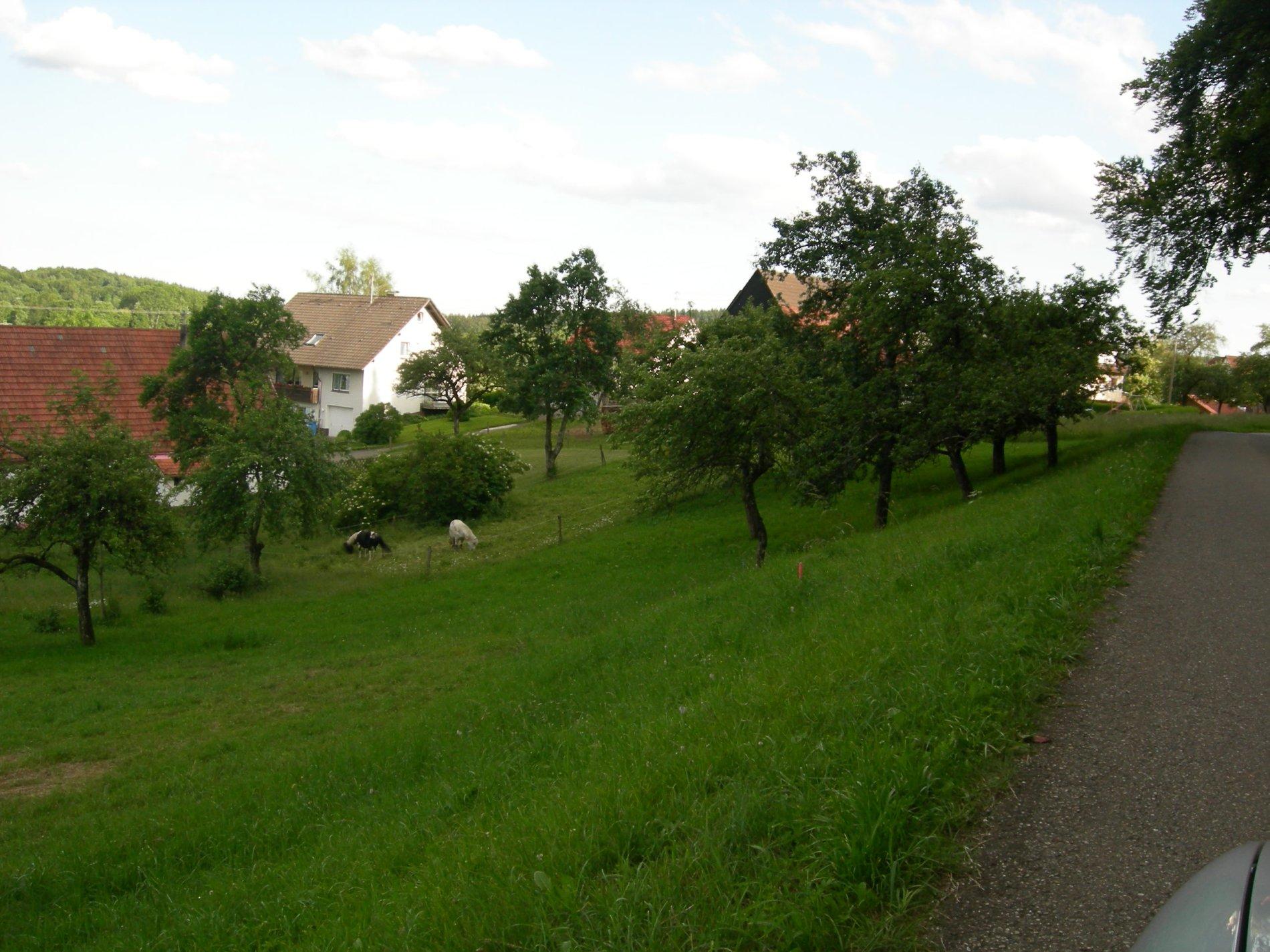 Wanderweg vorbei an Streuobstwiesen