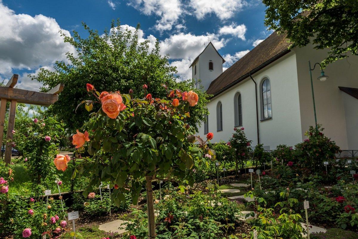Im Rosen Sortiments Garten