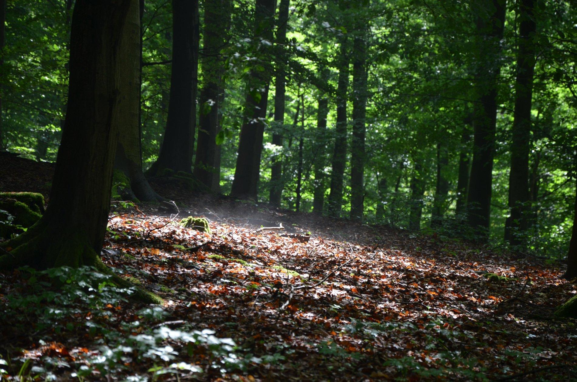 Lindenfels Waldabschnitt