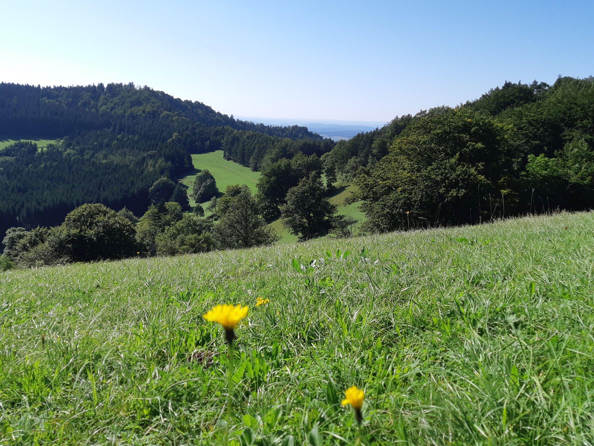 Sagenhafte Ruhe und wunderschöner Weitblick auf dem Aussichtspunkt Hörnle