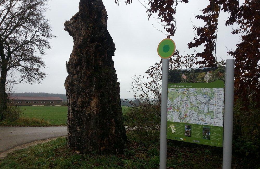 Wanderparkplatzschild und gleich daneben ein dicker Baumstamm in der linken Hälfte des Bildes.