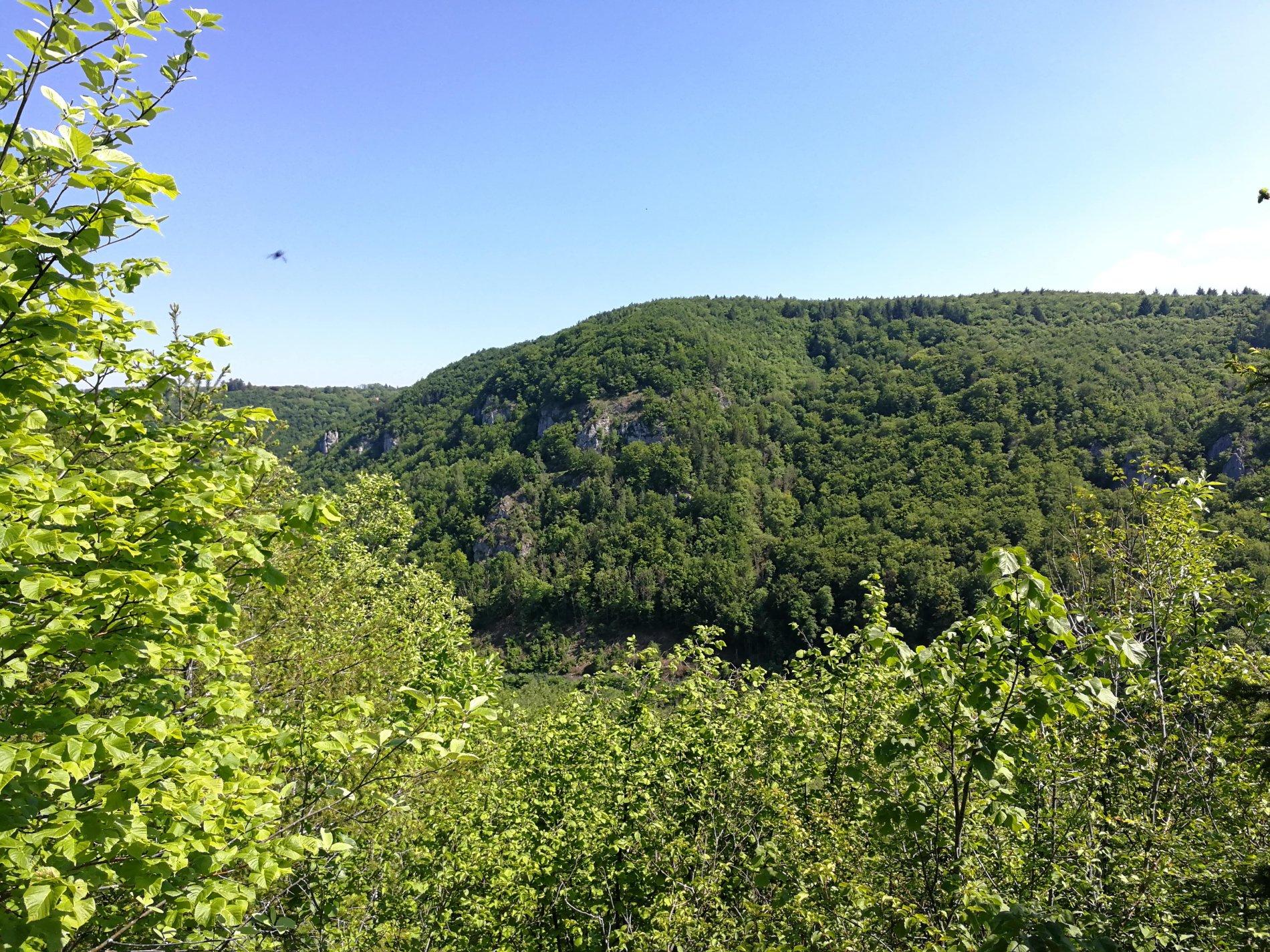 Ausblick in die Natur