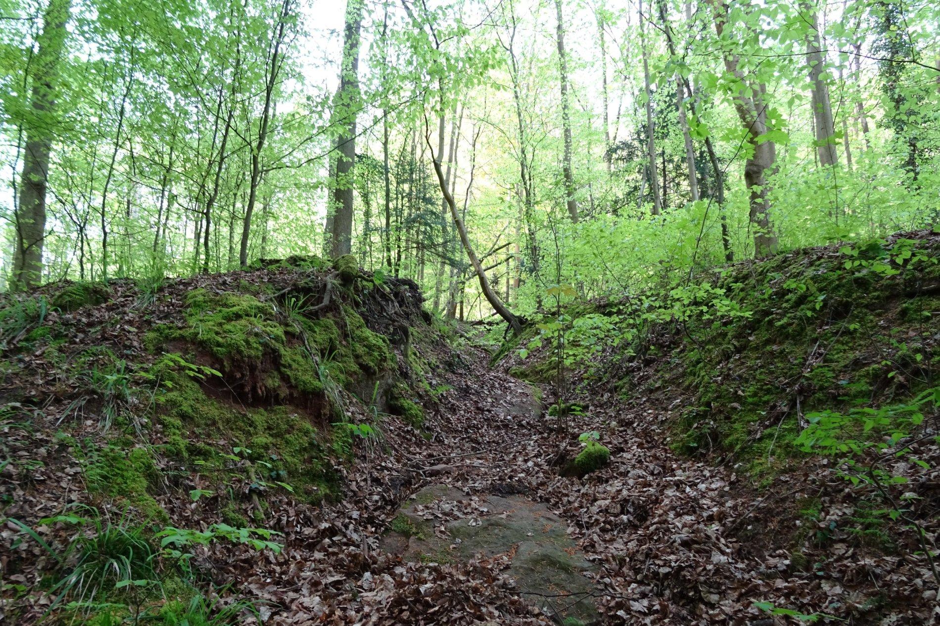 Waldstück am Greinberg
