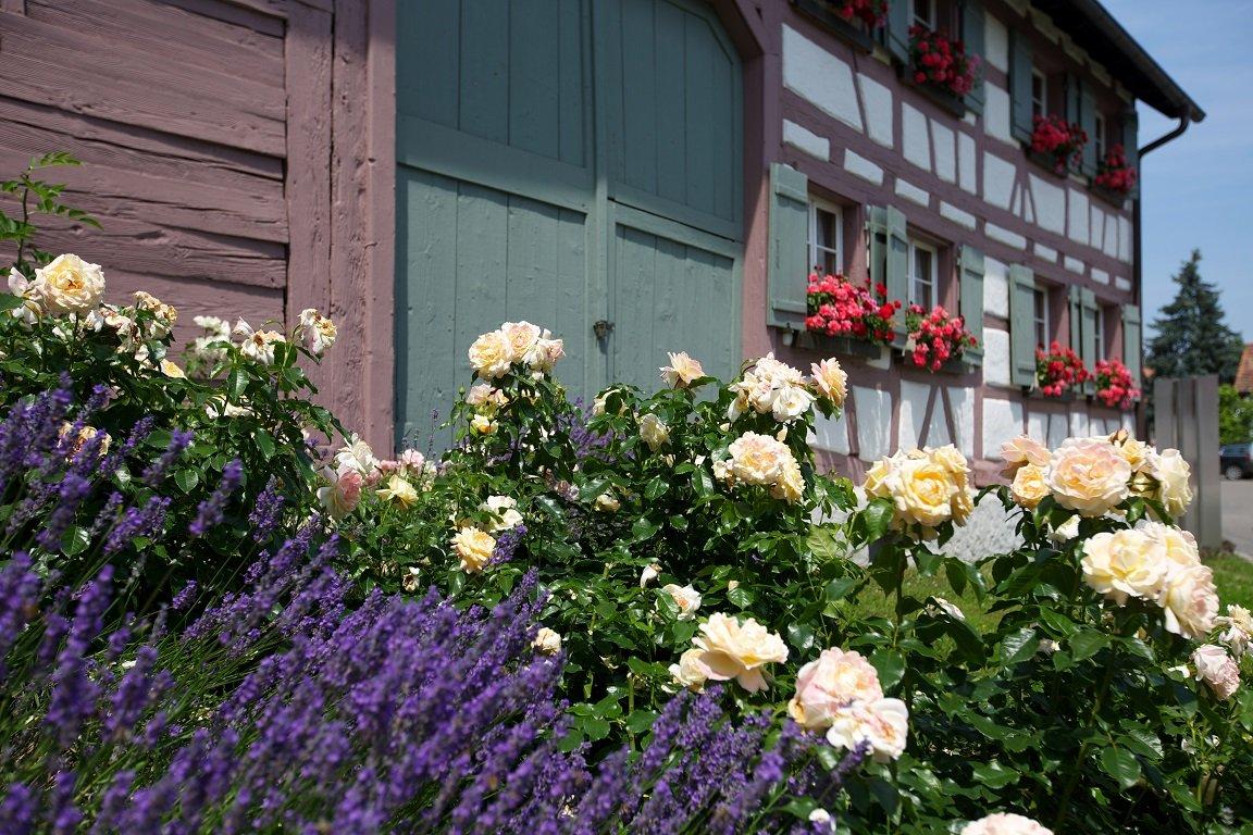 Blumenbeet vor dem Hesse Museum
