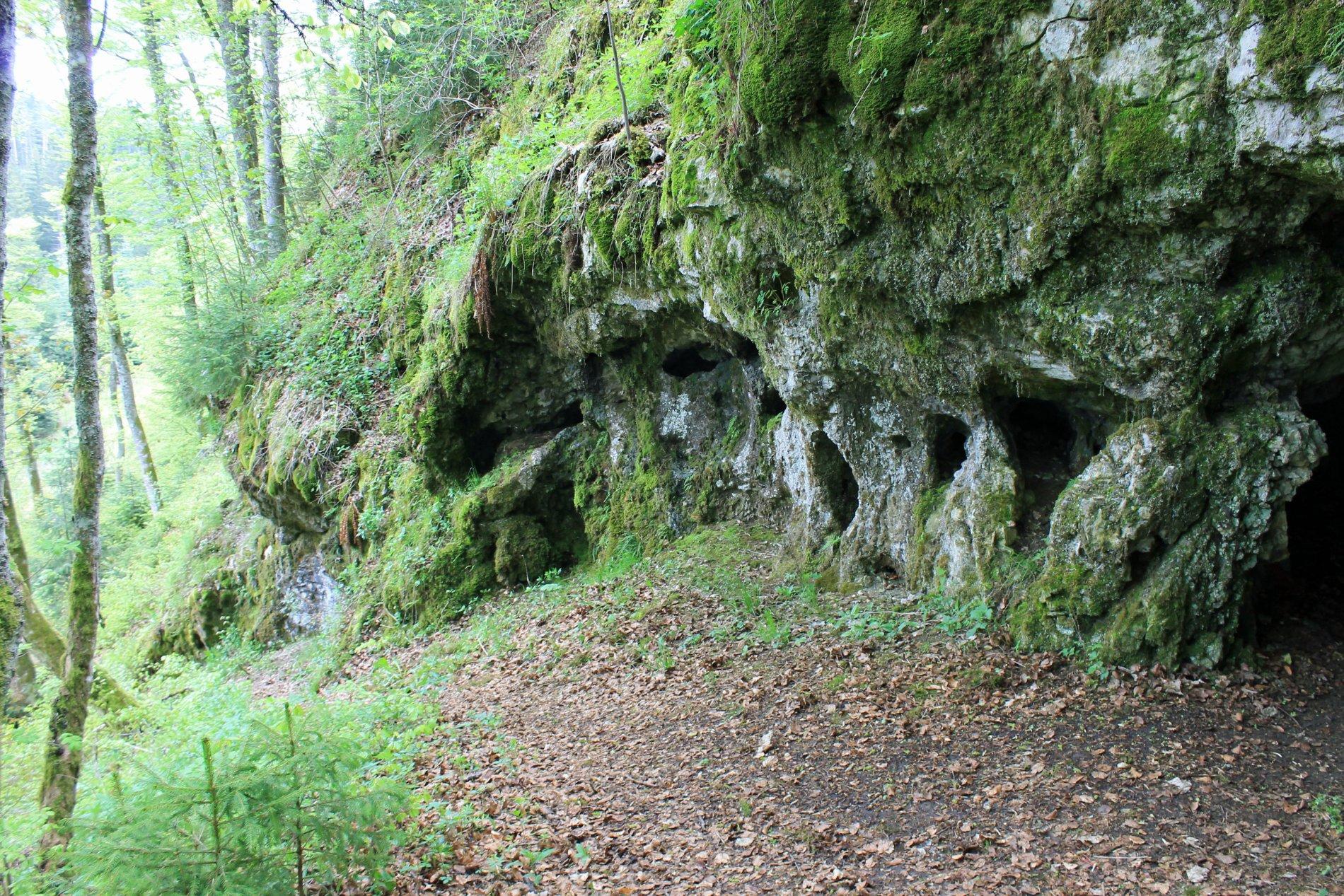 Mit Moos bewachsener Höhle