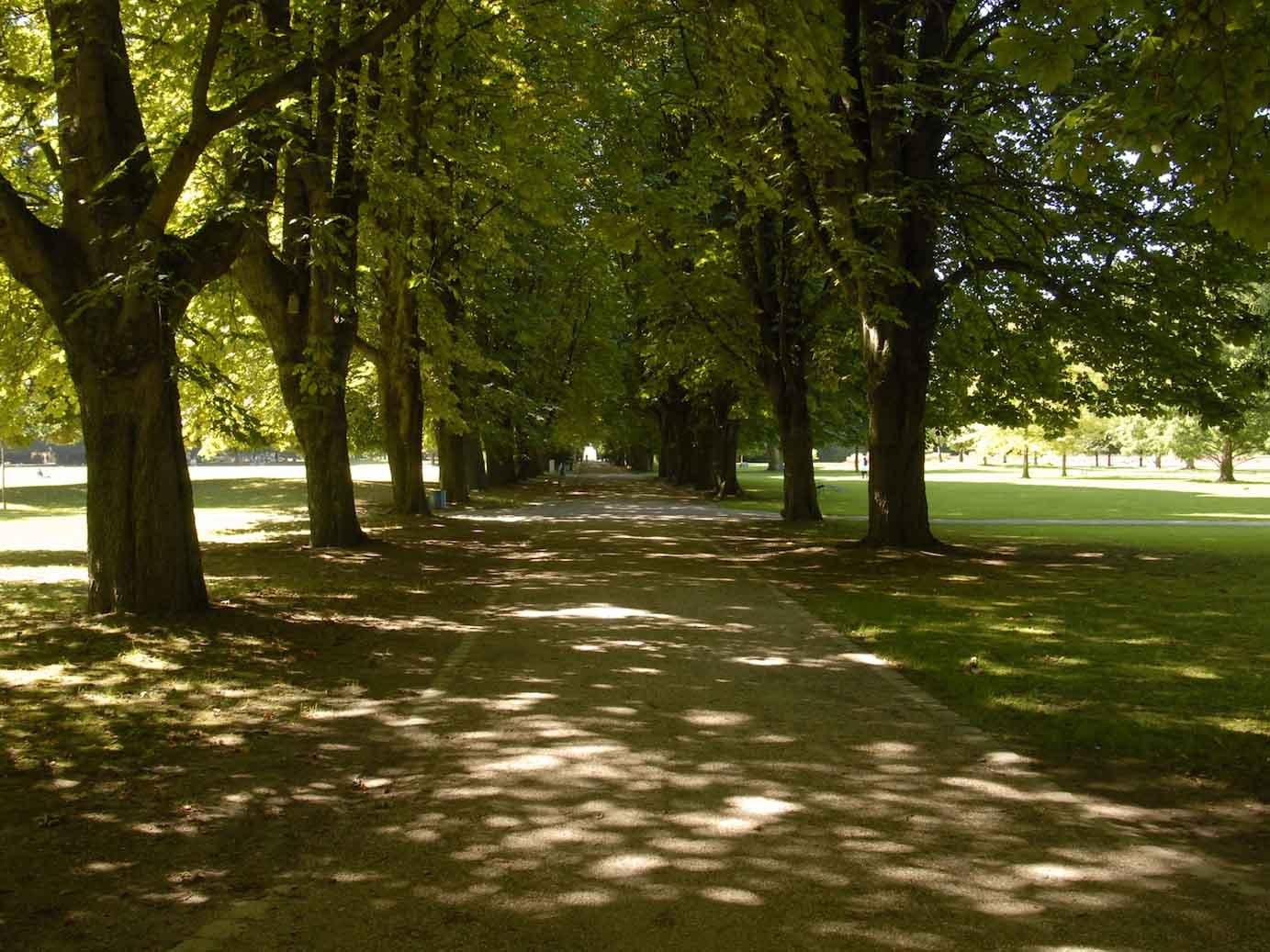 Baumallee im Herzogenriedpark