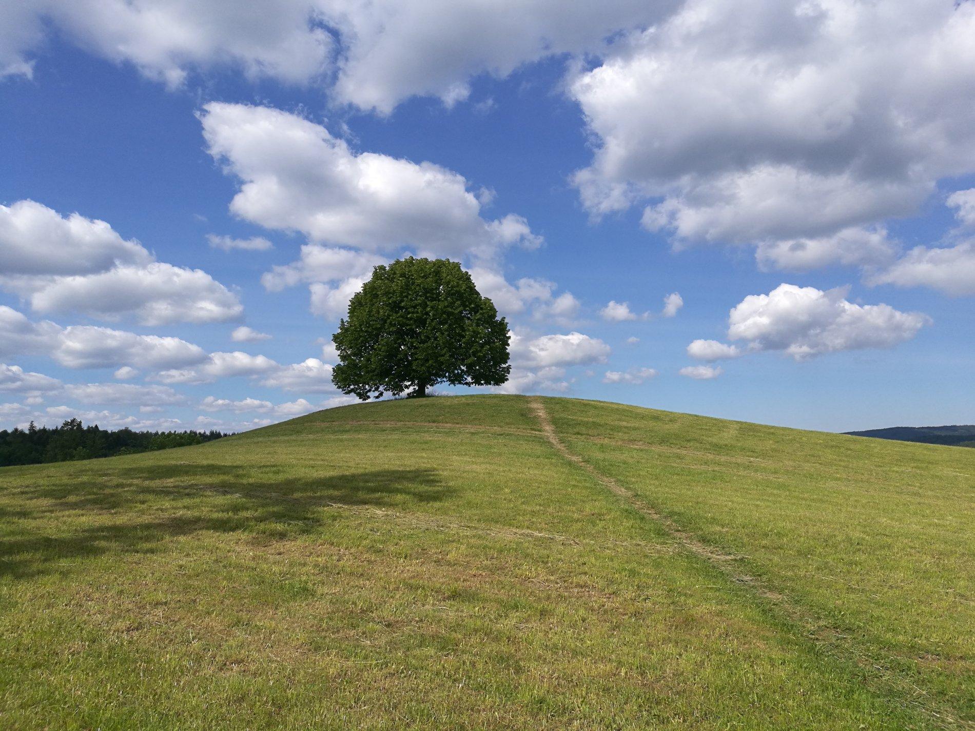 Ein einsamer Baum mitten auf dem Feldherrenhügel