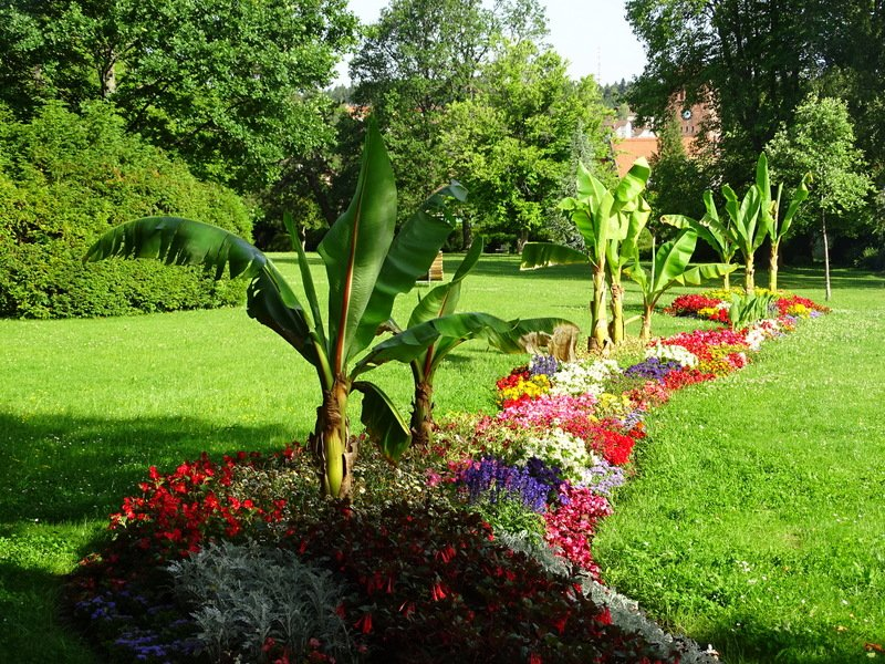 Blumenswing Kurpark Schömberg, Blumenbeet, Enz-Nagold-Platte, Schwarzwald