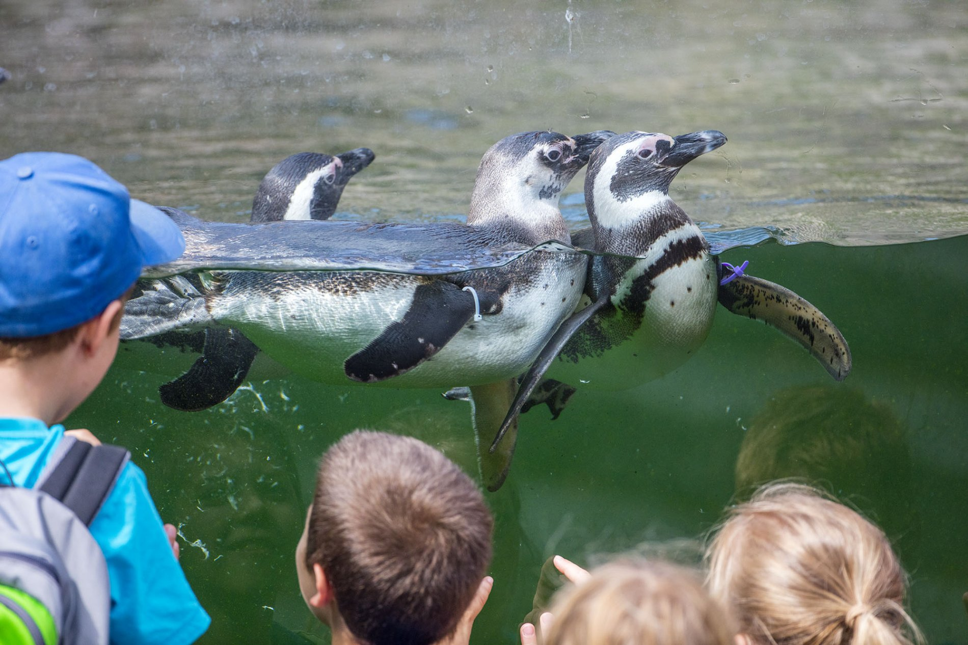 Pinguine im Karlsruher Zoo