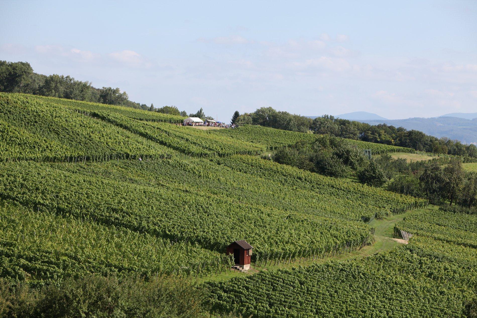 Der Weinweg