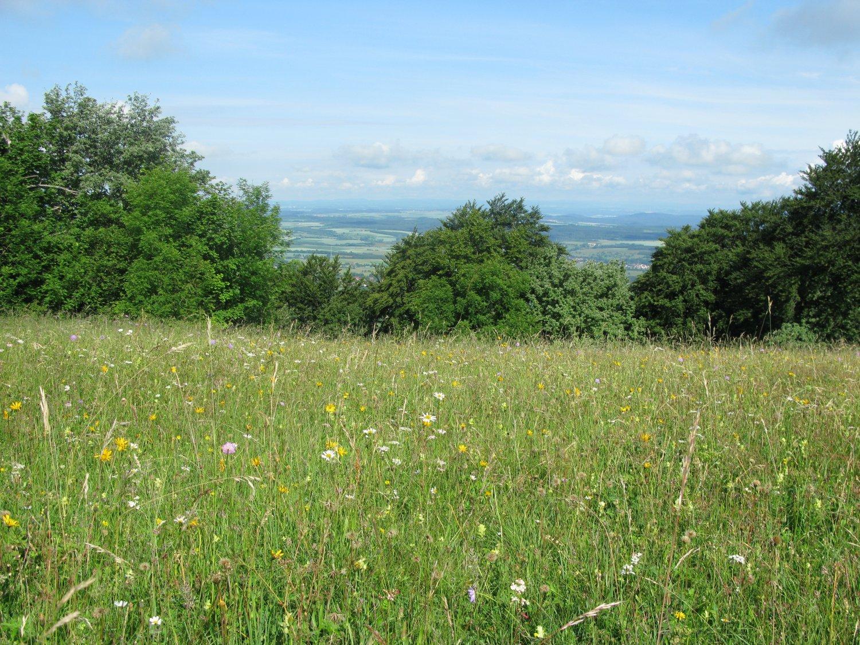 Naturschutzgebiet Hülenbuchwiesen