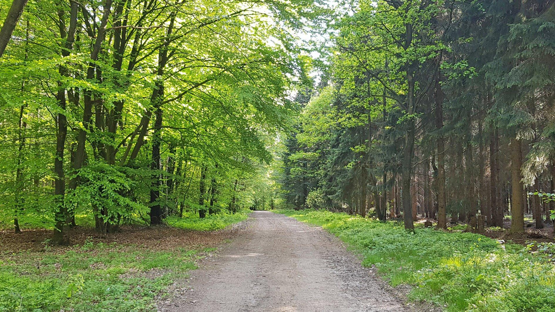 Forst Eichholz