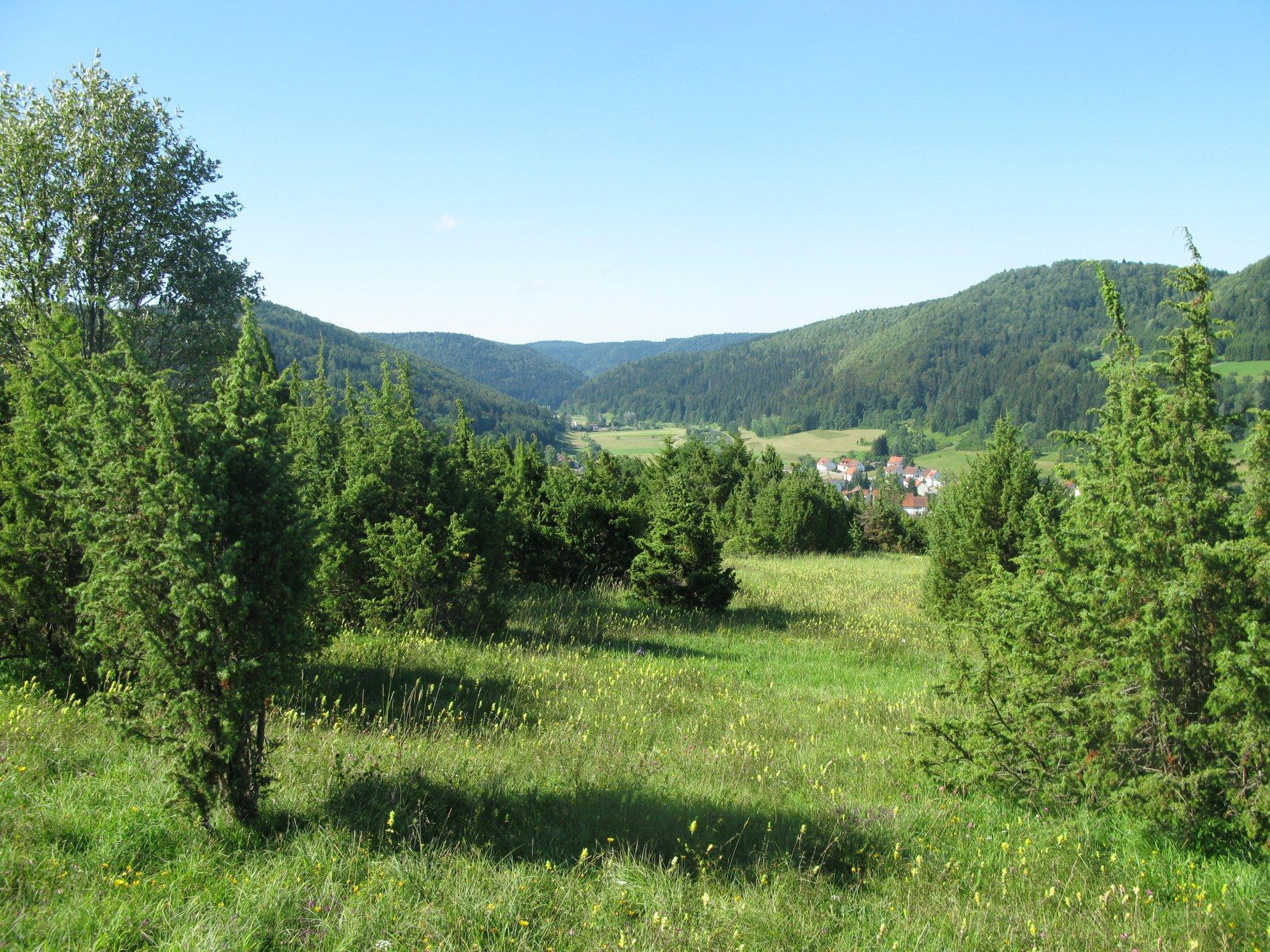 Blick über das Naturschutzgebiet Heimberg