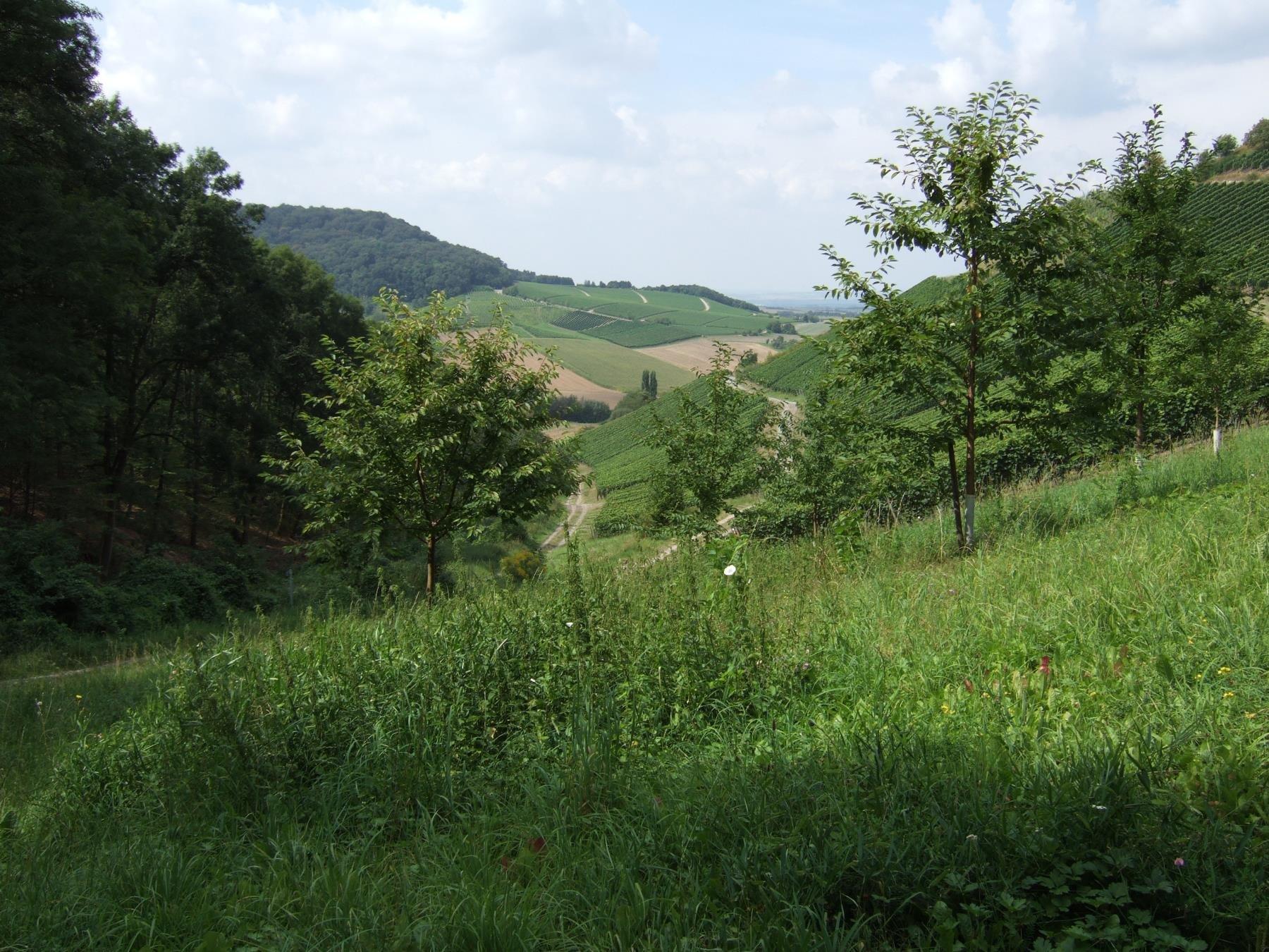 Bei Castell am Mahrenberg
