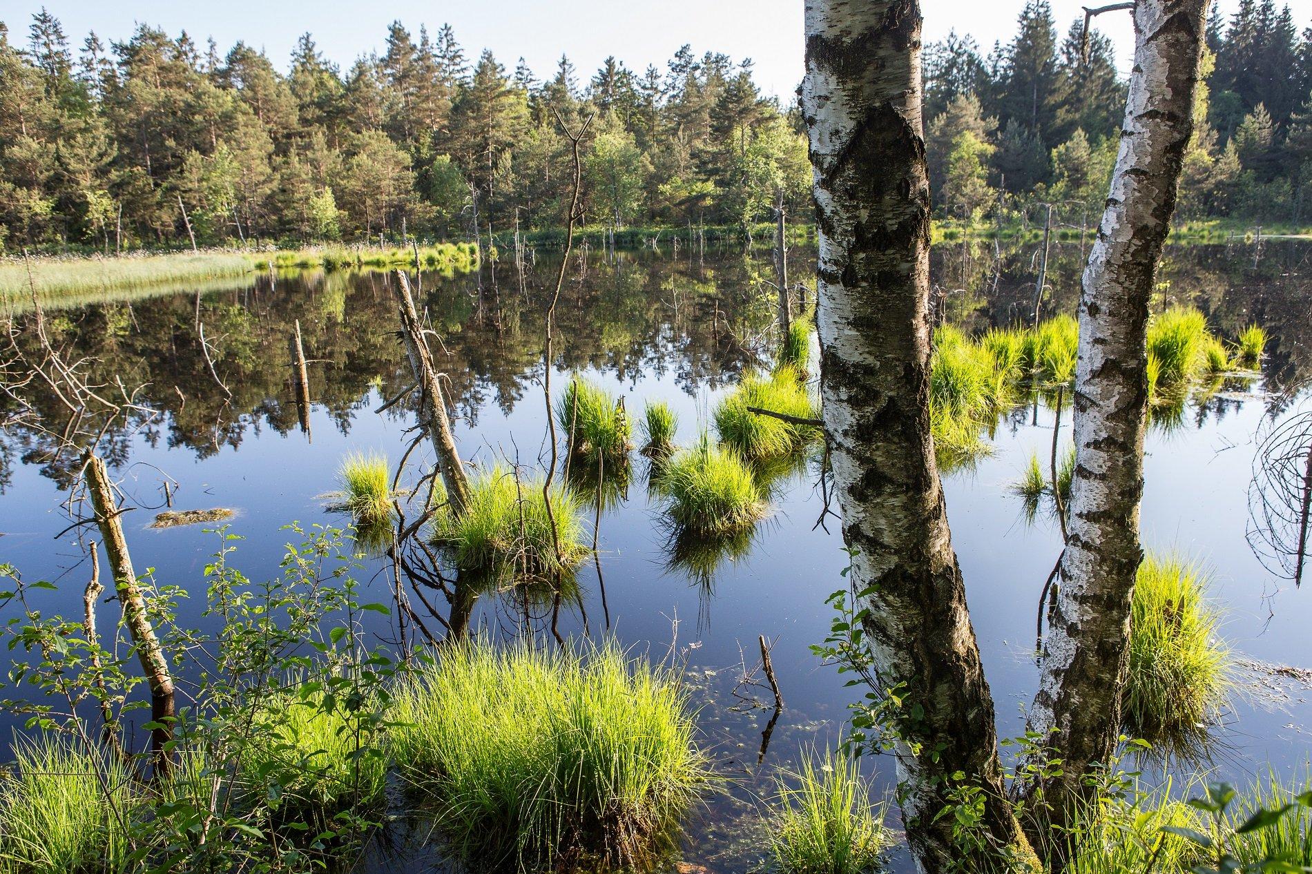 Landschaft im Steinacher Ried