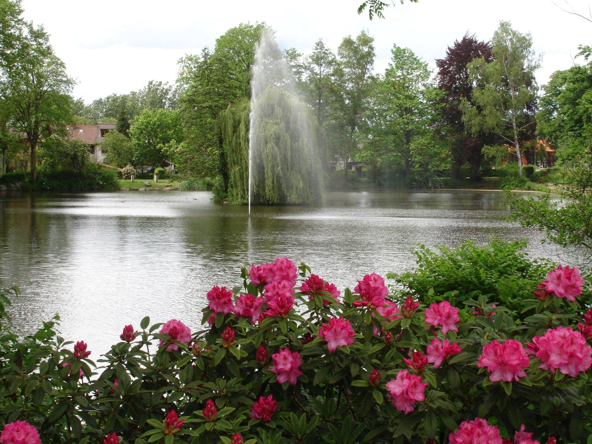 Blick über rosa Rosen auf den Staufener Stadtsee mit Fontäne in der Mitte