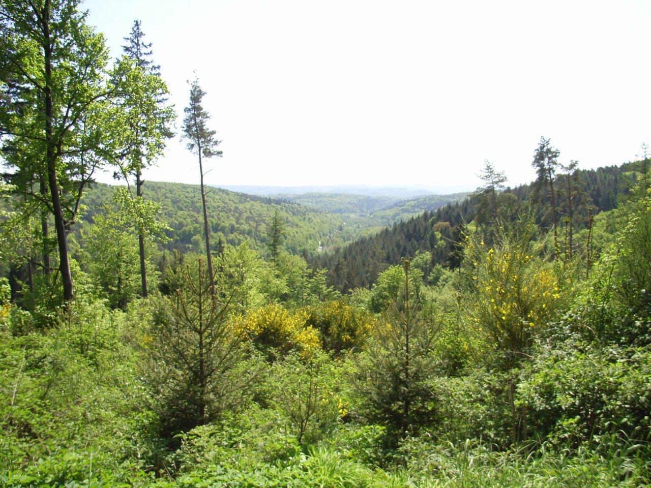 Ausblick in Albtal