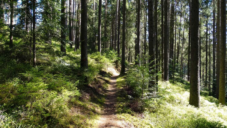 WaldWasserLäufer