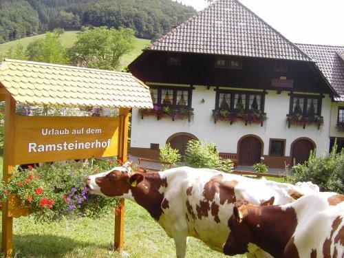 Kuh mit Hofschild