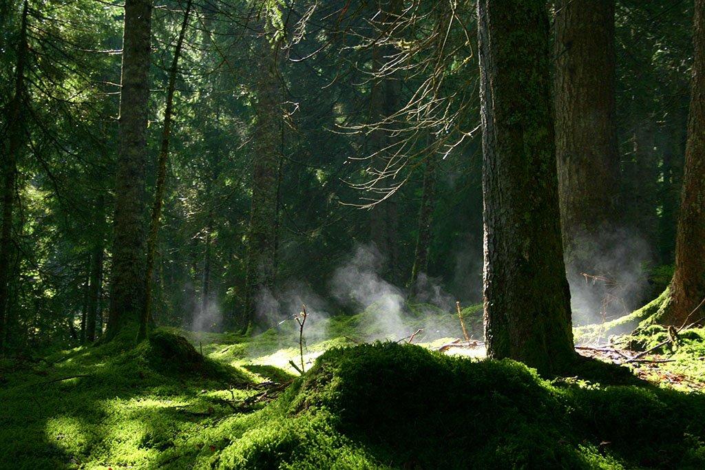 Bernau im Schwarzwald: Mystisch ist das Taubenmoos bei Bernau.
