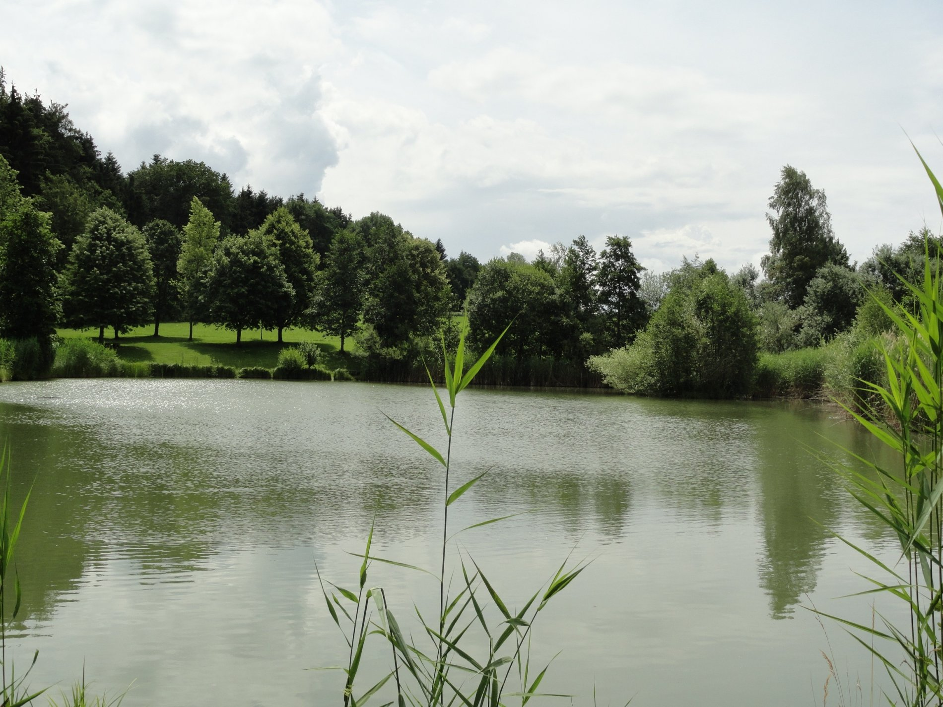 Blick auf den von Bäumen umgebenen Kohlbrunnweiher