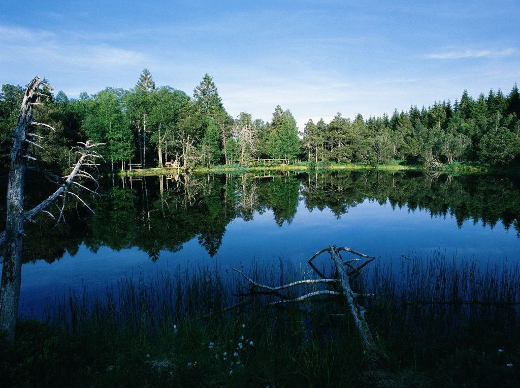 Naturschutzgebiet Blindensee, eines der seltenen Hochmoore im Schwarzwald