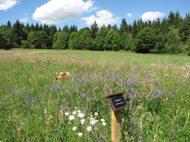 Eine hohe bunte Blumenwiese, in der ein kleines Schild steht. Dahinter ist Wald. Es ist sonnig.