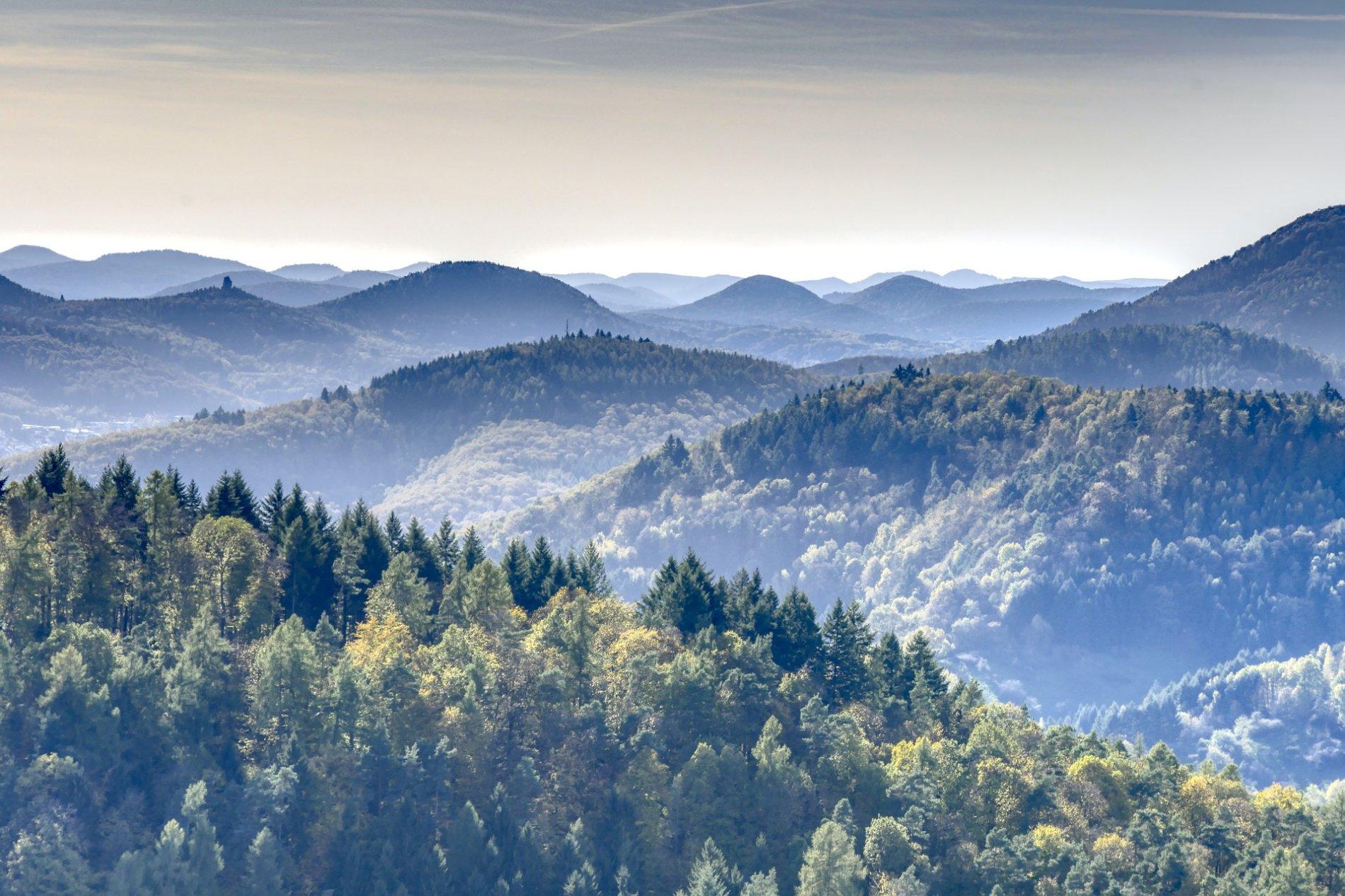 Pfalz Landschaft