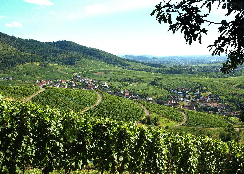 Baden-Badener Rebland