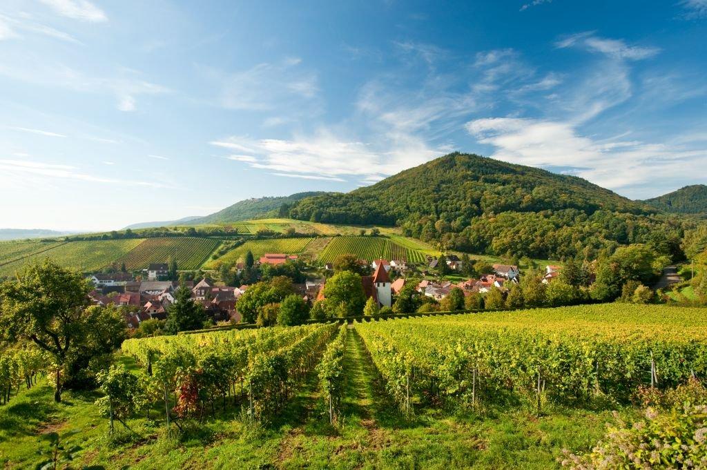 Pfälzer Weinsteig - Leinsweiler