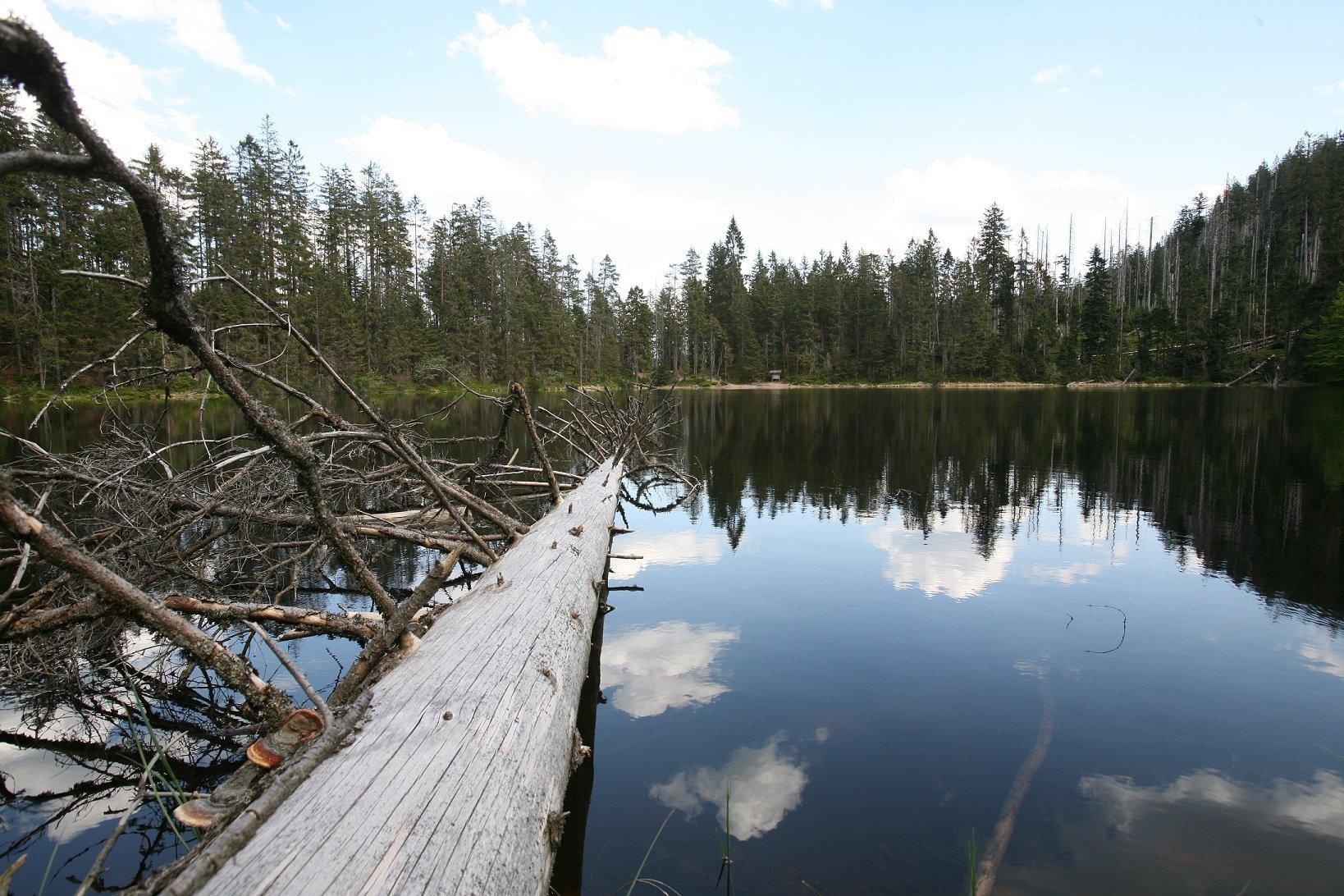 Ursprünglichkeit kann am Wildsee erlebt werden.