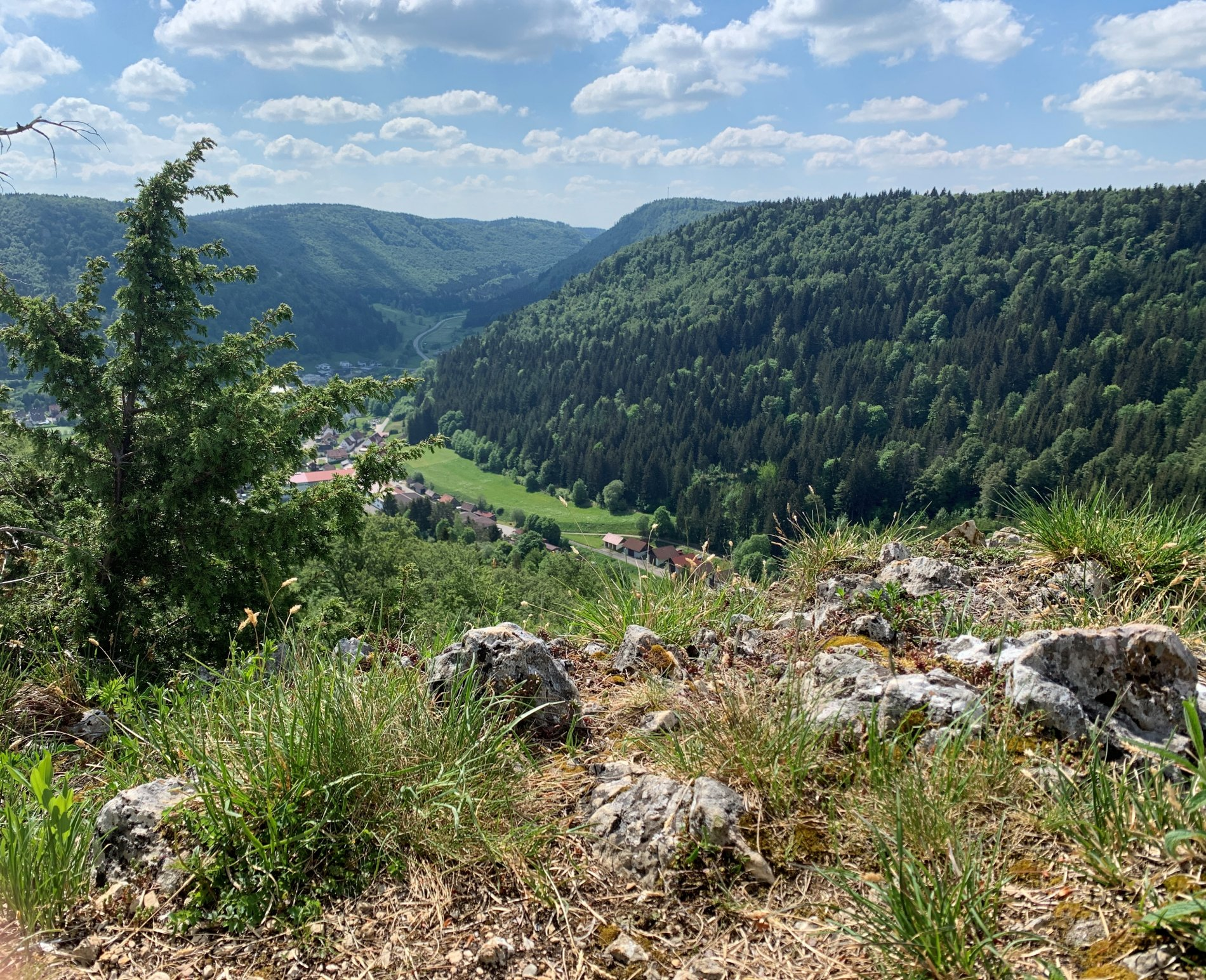 Waldpfad am Hummelbühl-Wanderweg