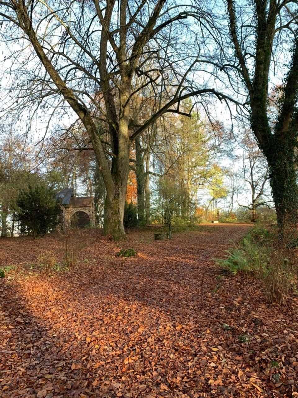 Ein Pfad unter Bäumen. Eine Kapelle im Hintergrund. Es ist Herbst.