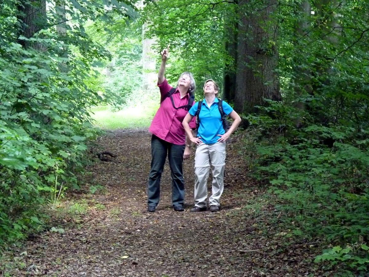 Wander im Kuhmühler Wald