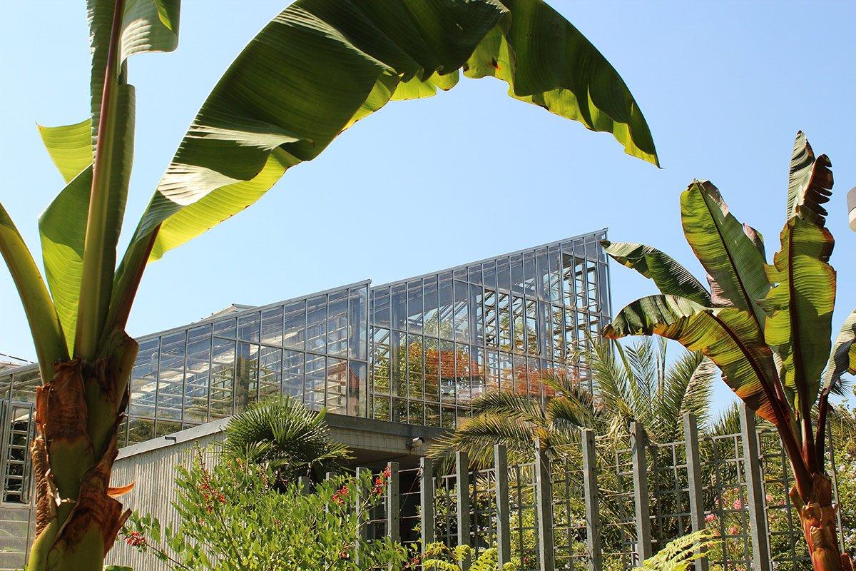 Freiburg-Botanischer-Garten