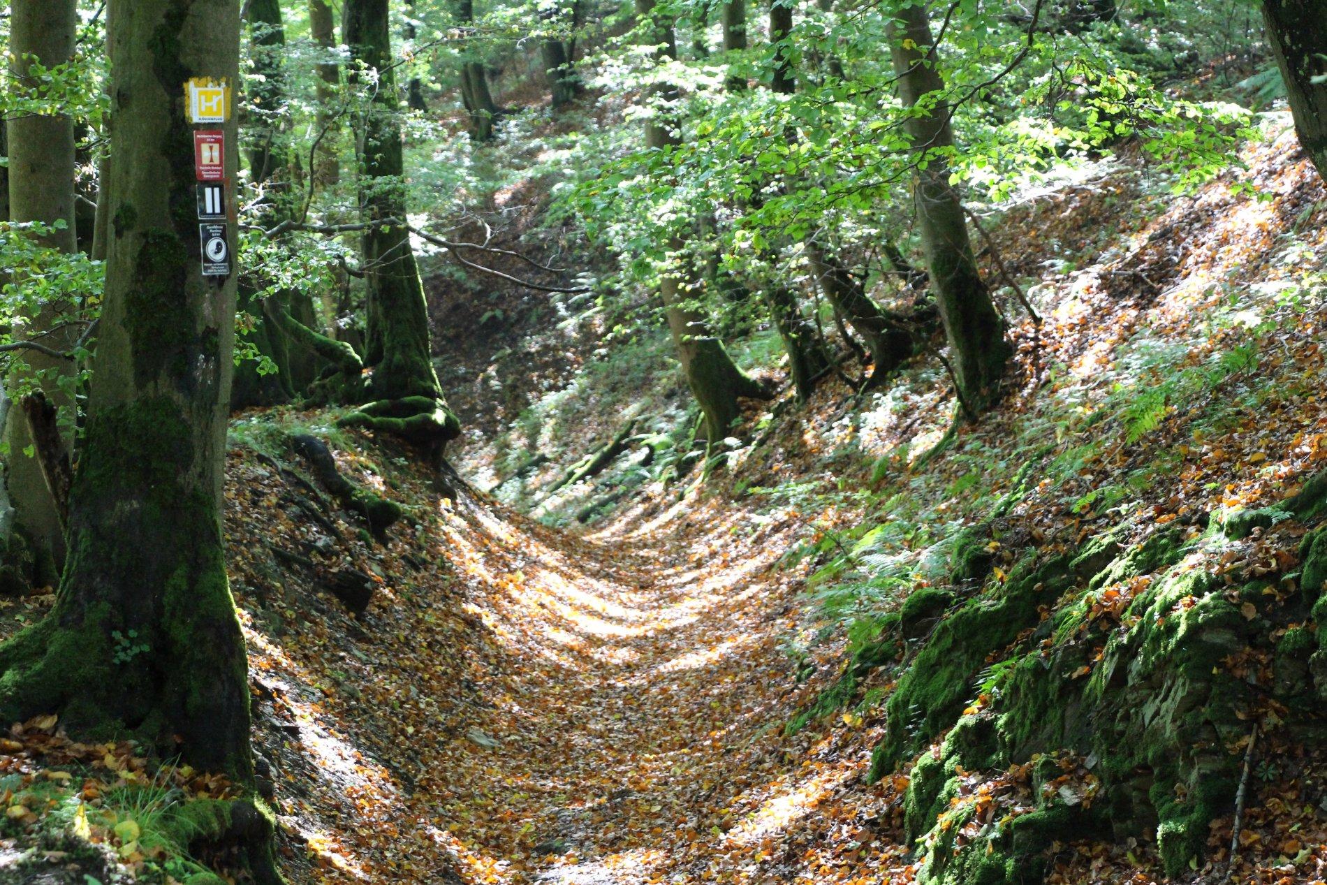 Geologischer Rundweg Düdinghausen Holweg