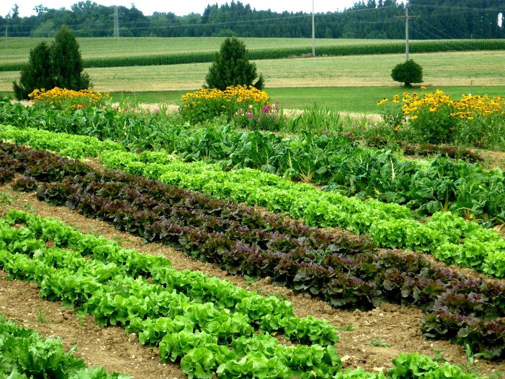 Gemüsebeete zum Selberernten im Naturgarten Schönegge bei Nandlstadt