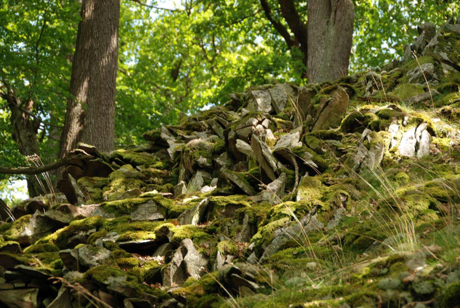 Steinige Hänge auf der Nordseite des Edersees