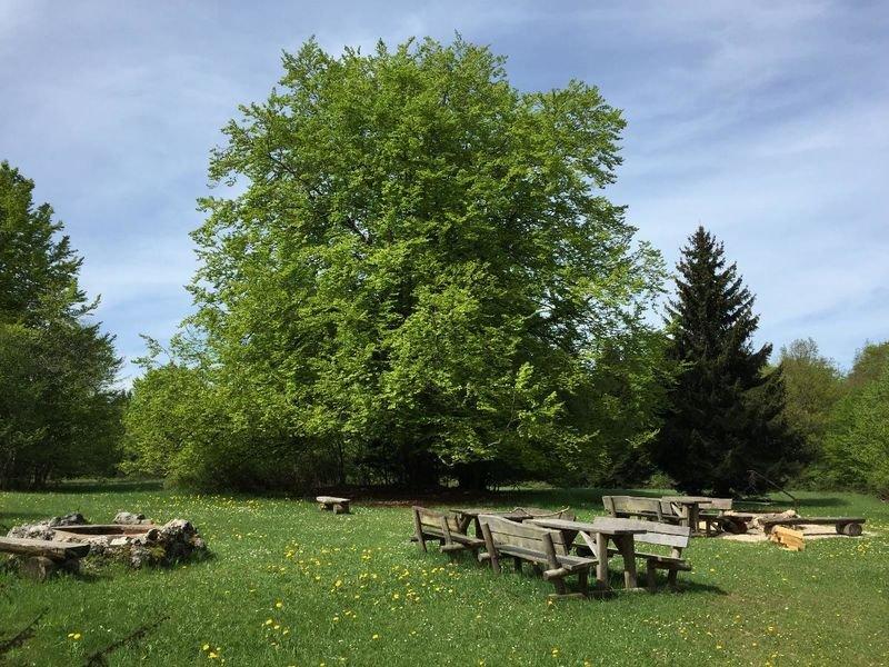 Eine Wiese mit mehreren Holzbänken und -tischen und zwei offenen Grillstellen. Dahinter ist Wald. Es ist sonnig.