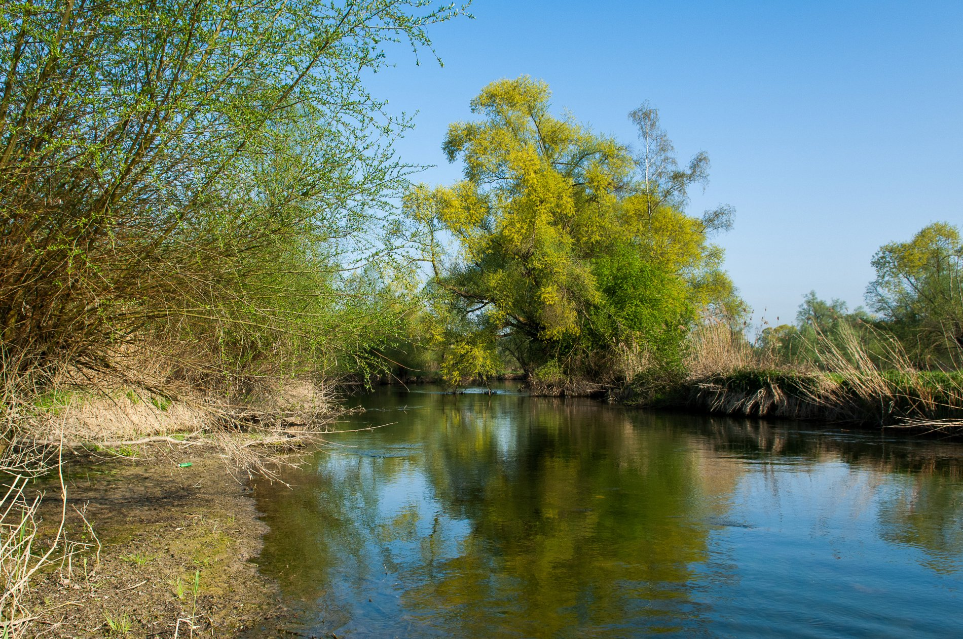Wilde Naturlandschaft im Reussdelta